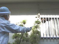 ハチ駆除_02