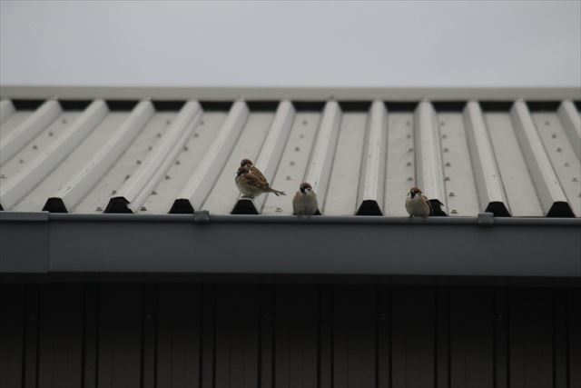 鳥 の 物 フン 洗濯